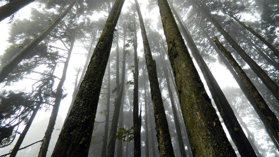 غابة الموت والانتحار باليابان