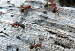 حقائق عن النمل