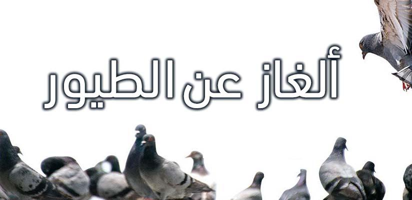 ألغاز عن الطيور