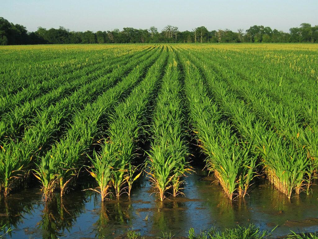 الثروة الزراعية