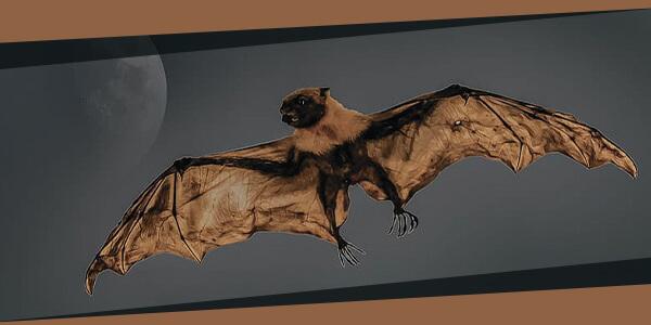 الخفاش العملاق